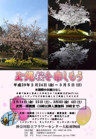 【フラワーセンター大船植物園】H28年度玉縄桜を楽しもうちらし_page0001.jpg