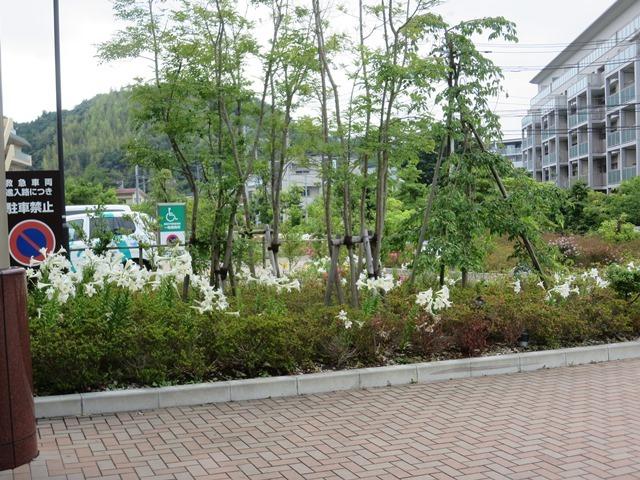 鎌倉 病院 湘南 総合